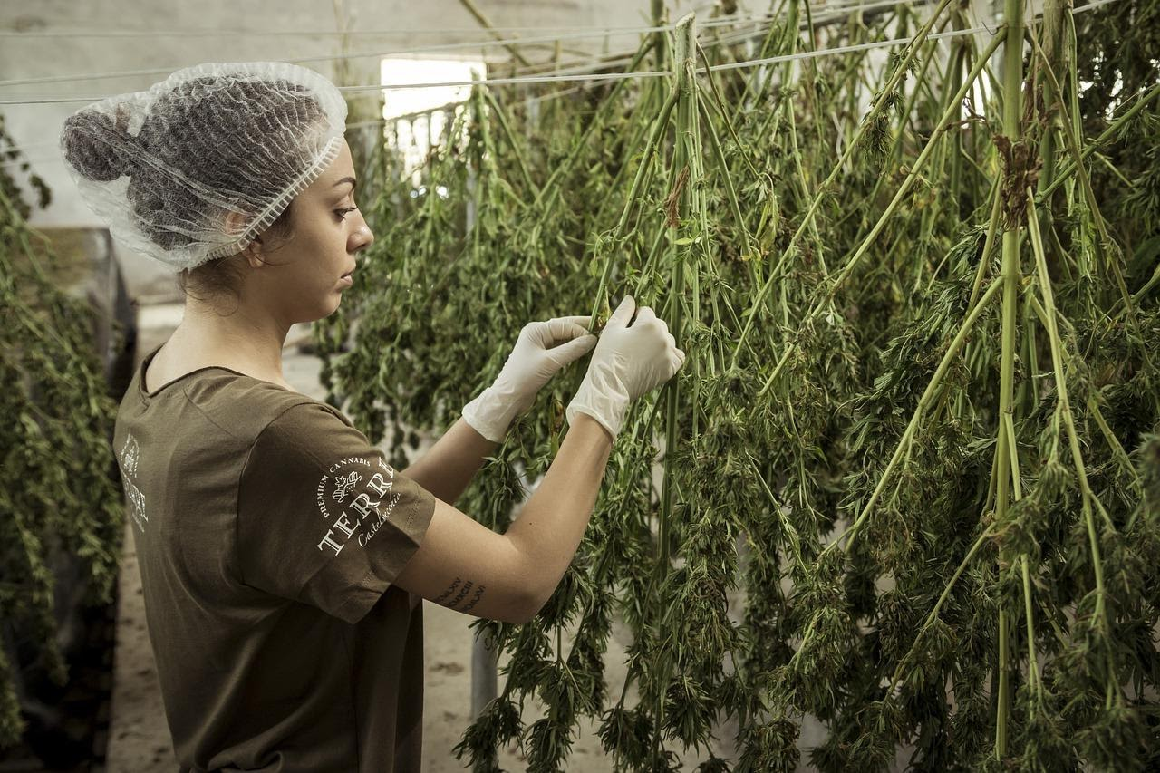 CBD industry Quality tracking software